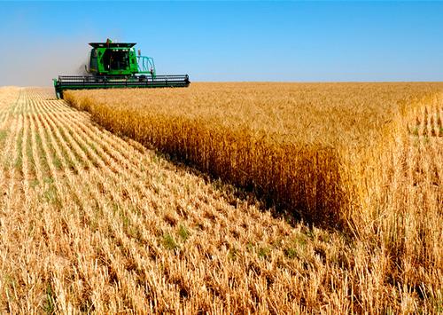 Чужой урожай, как свой собственный, преступники собирают в степях Таврии