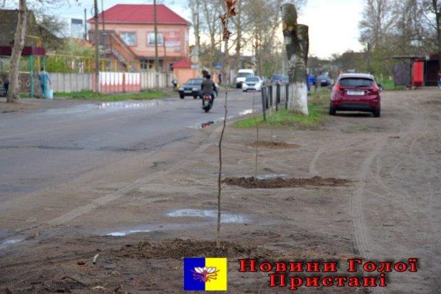 В Голой Пристани на центральной улице города высадили 100 платанов