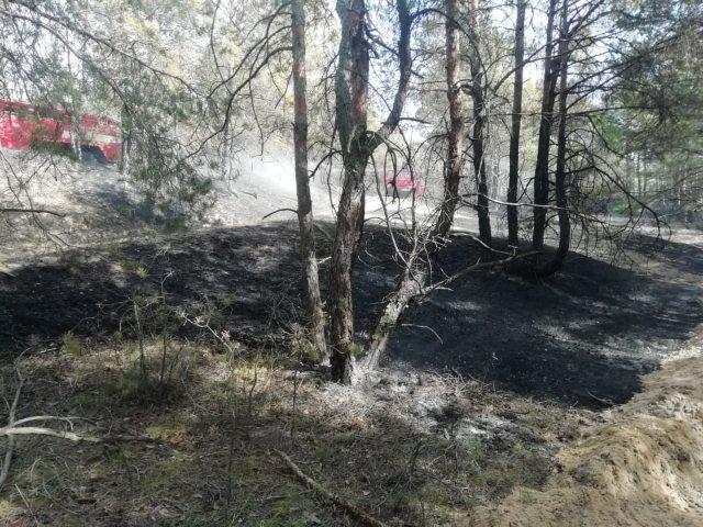 В Голопристанском районе до сих пор тушат пожар в лесу
