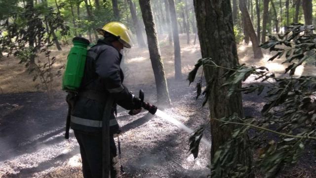 В Каховском лесничестве чуть не сгорел весь лес