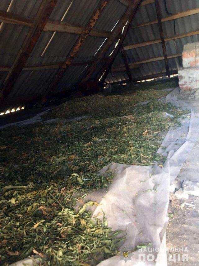 В Херсонской области полиция задержала мужчин, которые вырастили конопли на 20 миллионов гривен